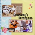 Guinea Pig's petting zoo